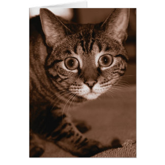 Worried Cat Card