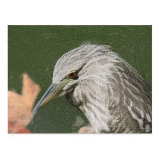 Woven Night Heron Postcard