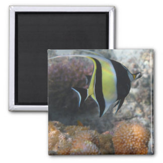 Wow! Look At That Cool Fish! Magnet