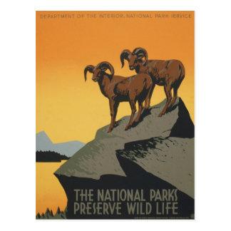 WPA Vintage National Parks Wildlife Travel Postcard