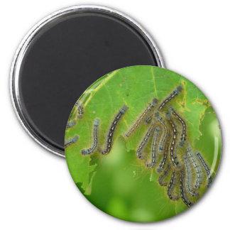 wriggling caterpillars 2 inch round magnet