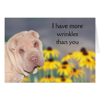 Wrinkled Shar Pei Birthday Card