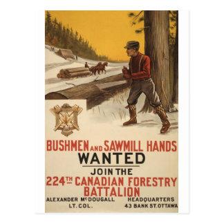 WW I ~ 224th Canadian Forestry Battalion 1915 Postcard