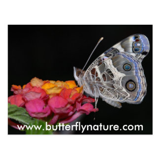 www.butterflynature.com postcard