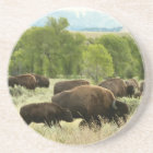 Wyoming Bison Nature Animal Photography Coaster