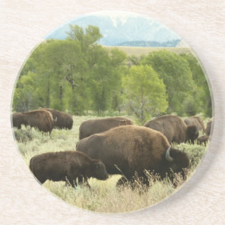 Wyoming Bison Nature Animal Photography Coaster