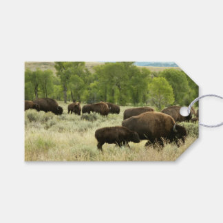 Wyoming Bison Nature Animal Photography Pack Of Gift Tags