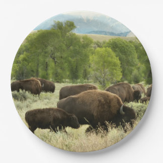 Wyoming Bison Nature Animal Photography Paper Plate