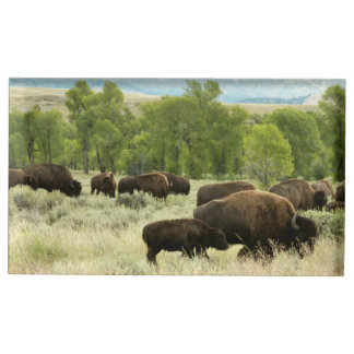 Wyoming Bison Nature Animal Photography Place Card Holder