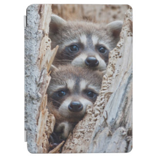 Wyoming, Lincoln County, Raccoon iPad Air Cover