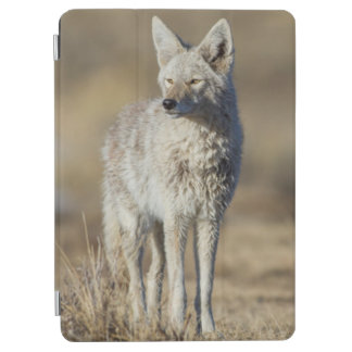 Wyoming, Sublette County, Coyote in morning iPad Air Cover