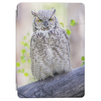 Wyoming, Sublette County, Great Horned Owl 2 iPad Air Cover