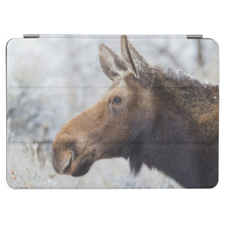 Wyoming, Sublette County, head shot of cow Moose iPad Air Cover