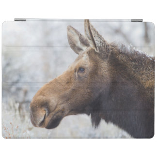 Wyoming, Sublette County, head shot of cow Moose iPad Cover