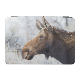 Wyoming, Sublette County, head shot of cow Moose iPad Mini Cover
