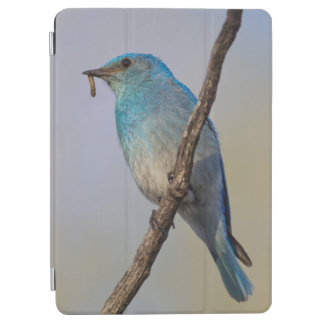 Wyoming, Sublette County, Male Mountain Bluebird iPad Air Cover