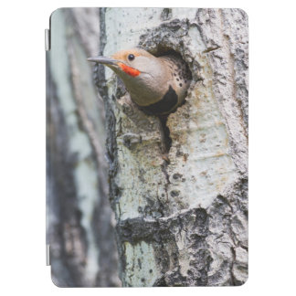 Wyoming, Sublette County, Male Northern Flicker iPad Air Cover