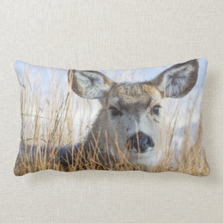 Wyoming, Sublette County, Mule Deer doe resting Lumbar Pillow