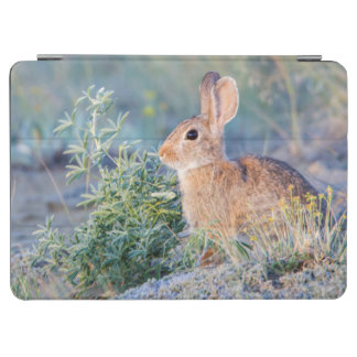 Wyoming, Sublette County, Nuttall's Cottontail 3 iPad Air Cover