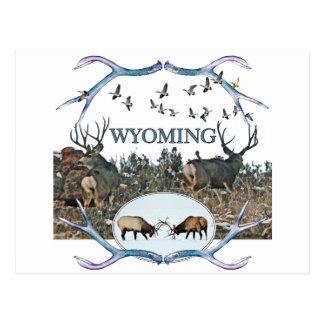 WYOMING wildlife Postcard