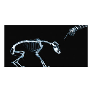 X-Ray Skeletons Blue Bad Dog Photo Greeting Card