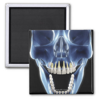 X-ray style look at human teeth magnet