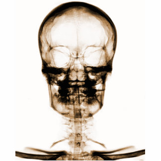 X-RAY VISION SKELETON SKULL - ORANGE STANDING PHOTO SCULPTURE