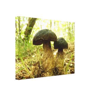 Xerocomus pruinatus Mushroom Canvas Print