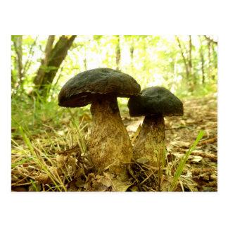 Xerocomus pruinatus Mushroom Postcard