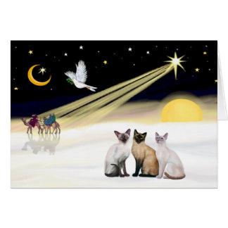 Xmas Dove / 3 Siamese cats Card
