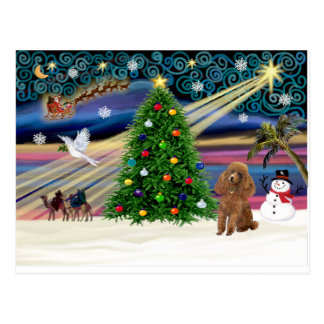 Xmas Magic-Poodle-Toy-Apricot Postcard