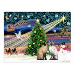 Xmas Magic - Two Siazmese cats (Seal + Choc) Post Card
