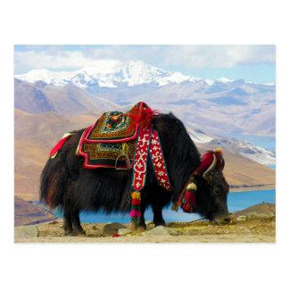 Yak Bos Grunniens near Yamdrok lake Tibet Postcard