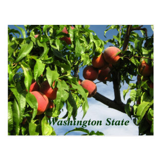 Yakima Valley Peaches, Washington State. Postcard