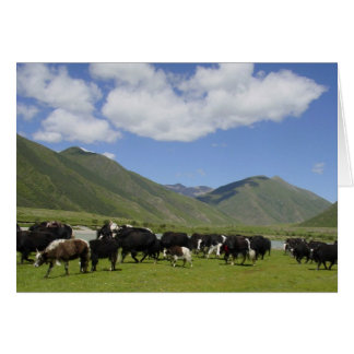 Yaks in Yarlung River Valley Greeting Card