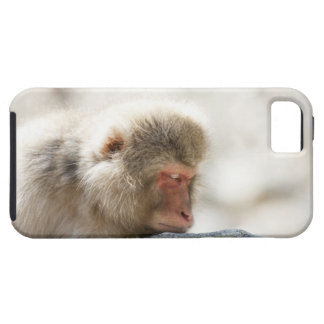 Yamanouchi, Chubu, Nagano Prefecture, Japan iPhone 5 Covers