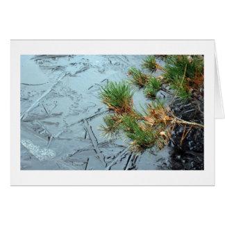 Yashiro Garden Mugo Pine and Ice on Pond Card