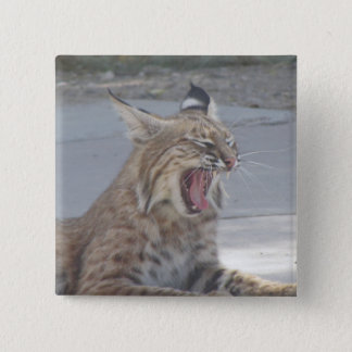 Yawning Bobcat 2 Inch Square Button
