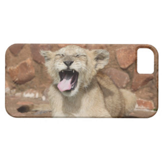 Yawning Lion Cub iPhone 5 Covers