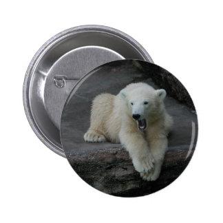 Yawning Polar bear cub Pinback Button