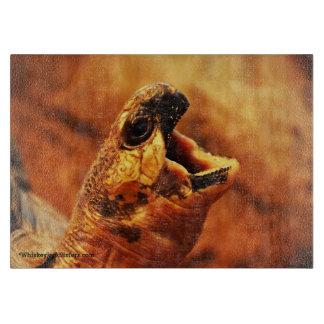 Yawning Radiated Tortoise Boards