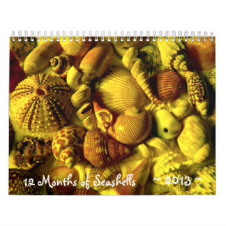 Year Long Seashell Photography Calendar
