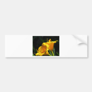 Yello Lillies Bumper Sticker