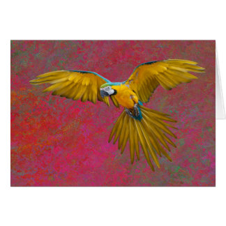 Yello parrot in flight card