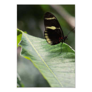 """Yellow And Black Butterfly 3.5"""" X 5"""" Invitation Card"""