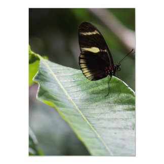 """Yellow And Black Butterfly 4.5"""" X 6.25"""" Invitation Card"""