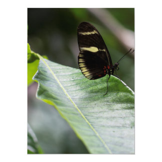 """Yellow And Black Butterfly 5.5"""" X 7.5"""" Invitation Card"""