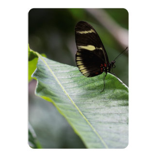 """Yellow And Black Butterfly 5"""" X 7"""" Invitation Card"""