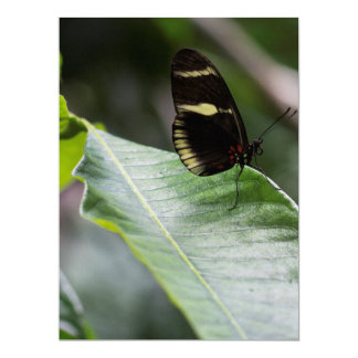 """Yellow And Black Butterfly 6.5"""" X 8.75"""" Invitation Card"""