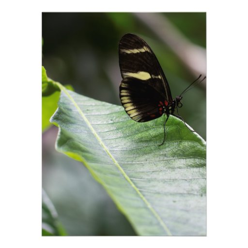 Yellow And Black Butterfly Announcements